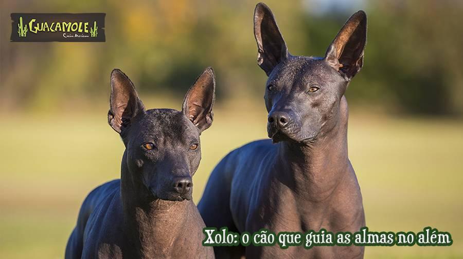 Xolo: o cão que guia as almas no além